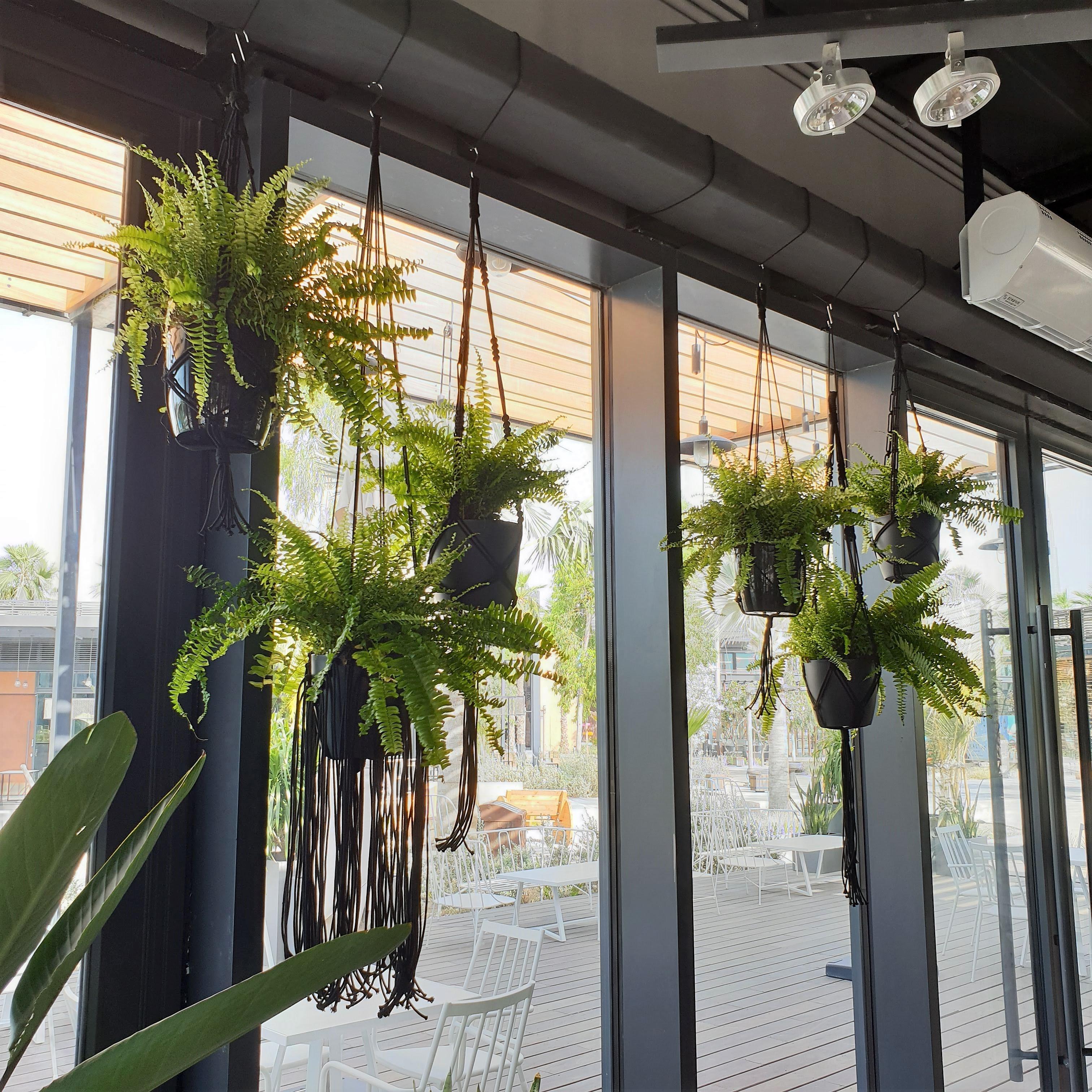 Custom Macrame Plant Hangers Turquoise Boutique Studio